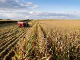 Nga không hạn chế xuất khẩu ngũ cốc thời gian tới