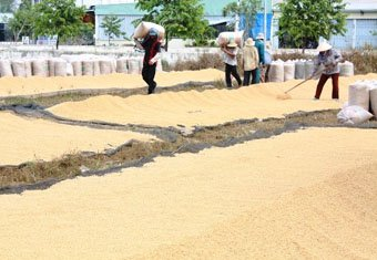 Trung Quốc tăng nhập gạo không phải vì thiếu gạo